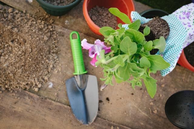 植物を育てる仕事